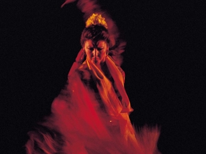 Jaleo Flamenco artist photo