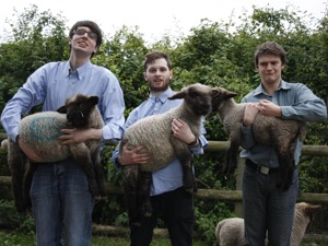 Sheeps artist photo
