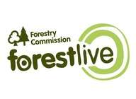 The Forestry Commission presents Forest Live 2017 artist photo