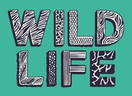Wildlife 2017 artist photo